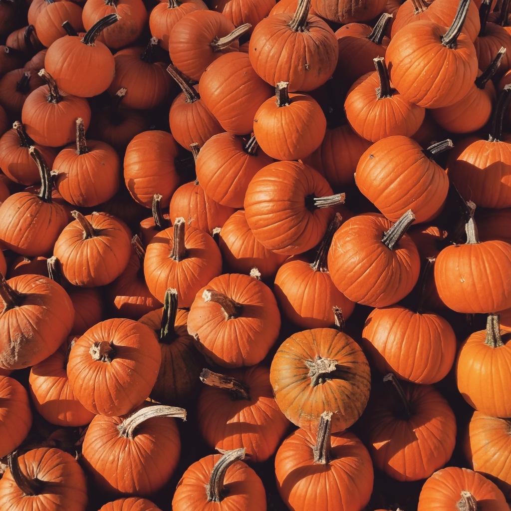 field trip size pumpkins | small orange pumpkins | Hillside Acres | Fresh pumpkins