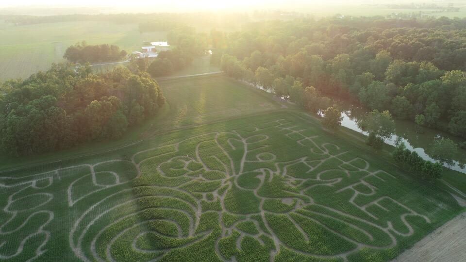 corn maze | Rossville hornet | Hillside Acres