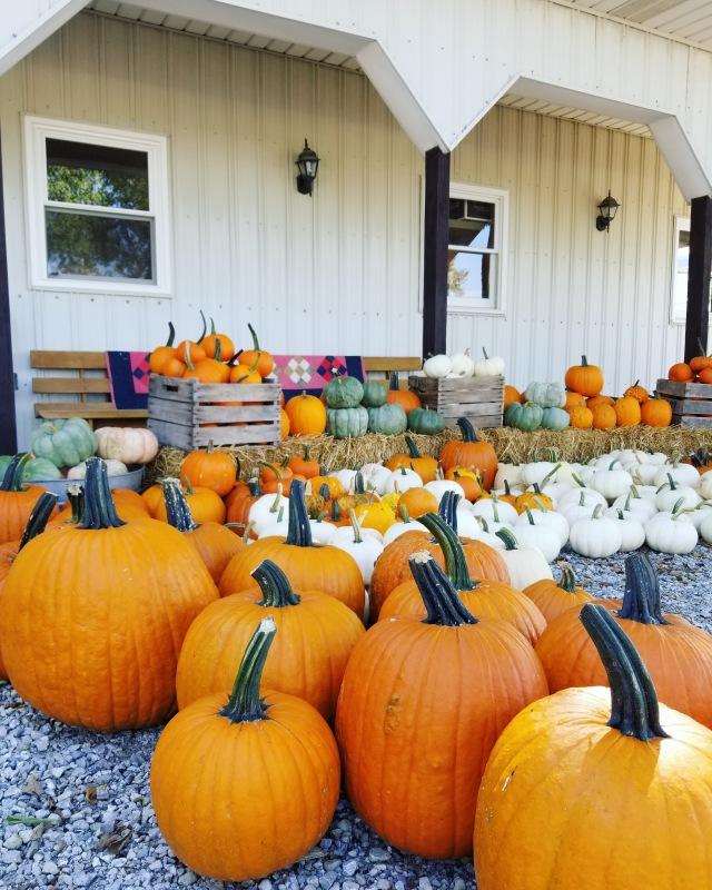 u-pick pumpkins | fresh pumpkins | Hillside Acres | farm pumpkins |