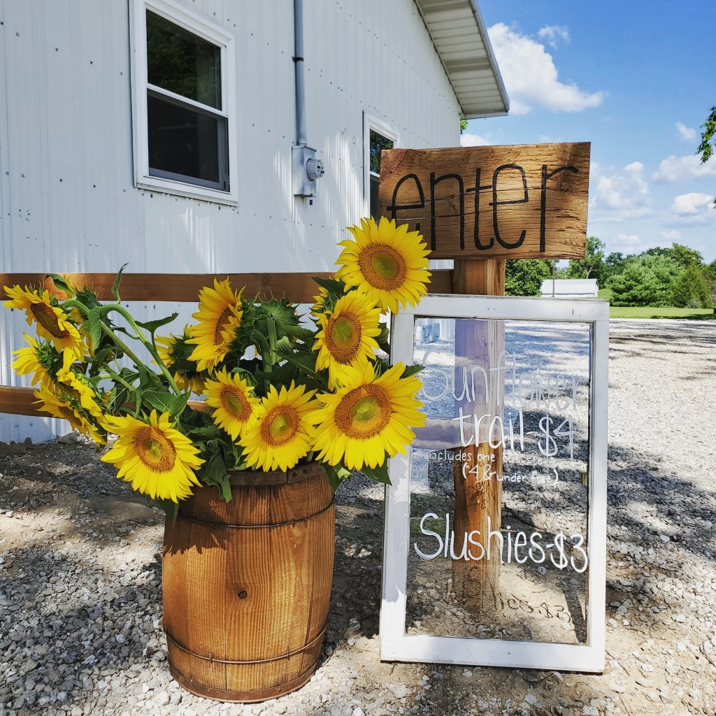 Sunflower trail | sunflowers | hillside acres | u-pick farm | sunflower patch | sunflower field