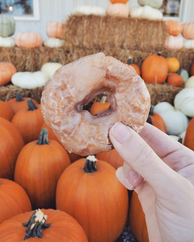 apple cider donus | hillside acres | glazed donut | fresh donut | pumpkin patch | fall must have | straw bales | fall family fun